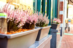 Pot plants on a street in Dutch city Royalty Free Stock Photography