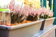 Pot plants on a street in Dutch city Royalty Free Stock Photos