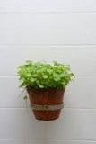 Pot plants on wall Stock Photo