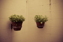 Pot plants on wall Royalty Free Stock Photography