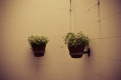 Pot plants on wall Royalty Free Stock Photo