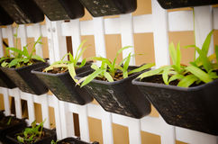 pot plants wall Stock Image