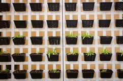 Pot plants wall Royalty Free Stock Photo