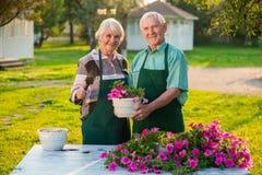 Pot plus âgé de couples et de fleur Photos libres de droits