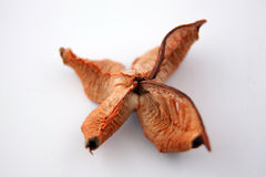 Pot Pourri. Used to decorate the home Stock Photo
