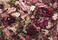 Pot-pourri Royalty Free Stock Images
