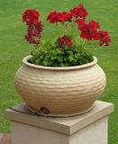 Pot With Red Flowers Stock Image