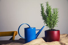 Pot with rosemary Royalty Free Stock Images
