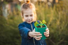 Pot with seedlings in children`s hands stock images