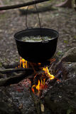 A pot of soup on fire in the forest Royalty Free Stock Photography