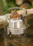 Pot of squirrel Stock Images