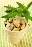 Pot with stones and aloe vera Royalty Free Stock Photos