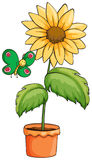 A pot with a sunflower Stock Image