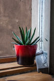 Pot sur un rebord de fenêtre Image libre de droits