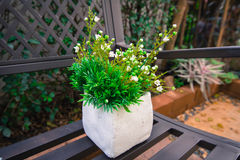 Pot tree. Trees for various types of decoration restaurants and homes Stock Photos