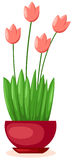 A  pot of tulips Royalty Free Stock Photos