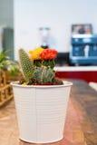 Pot van cactus op bureaulijst Royalty-vrije Stock Afbeeldingen