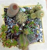 Pot van Cactussen Stock Afbeeldingen