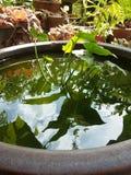 Pot van groen stock foto