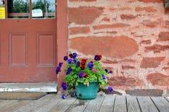 Pot van Pansies Stock Fotografie
