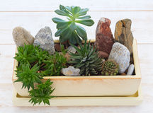Pot with a variety of plants Royalty Free Stock Image