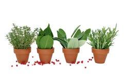 Pot of various herbs Stock Photography