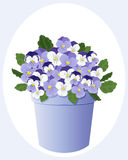 Pot of violas Stock Photo