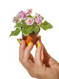 Pot of violets in her hand Royalty Free Stock Images