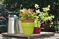 Pot, watering plants in a garden table Royalty Free Stock Photos