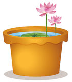 A pot with a waterlily and lotus flowers Stock Photos
