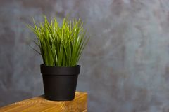 Grass in a pot. Home-grown grass. Pot with wheat grass on window sill, closeup. Grass in a pot. Home-grown grass Royalty Free Stock Photography