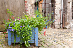 Pot of wild flowers. In a street Stock Images