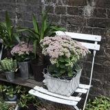 Pot witn kalanchoe on  white chair as a decoration of the gar Royalty Free Stock Photography