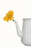 Pot with yellow flower. An isolatd pot with yellow flower Royalty Free Stock Image