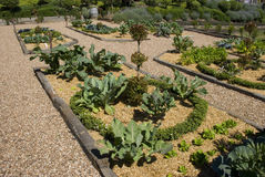 potager сада Стоковые Изображения RF