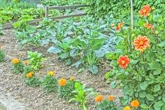 Potager décoratif avec des légumes et des fleurs Image stock