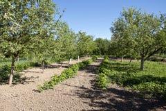 Potager de fermier au printemps Photo libre de droits
