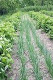 Potager de fermier au printemps Photographie stock libre de droits