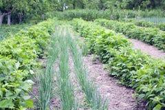 Potager de fermier au printemps Image stock