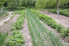 Potager de fermier au printemps Image libre de droits