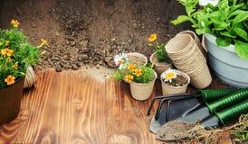 Potager et fleurs de jardin Photo libre de droits