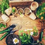 Potager et fleurs de jardin Image stock