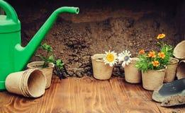 Potager et fleurs de jardin Photo stock