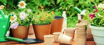 Potager et fleurs de jardin Photos stock