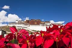 potala Θιβέτ παλατιών lhasa στοκ εικόνες