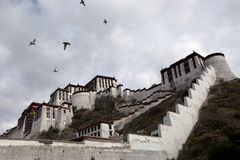 The Potala and Flying Birds Stock Photos
