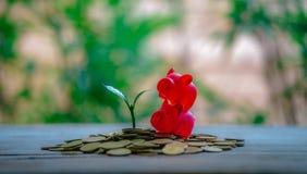 Potando sulle monete - idee di investimento per crescita fotografia stock libera da diritti