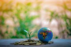 Potando sulle monete - idee di investimento per crescita fotografie stock