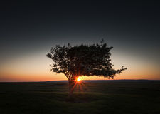 Potargany drzewo przy Pemclawdd, Gower Obraz Stock