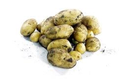 Potatis royaltyfri bild